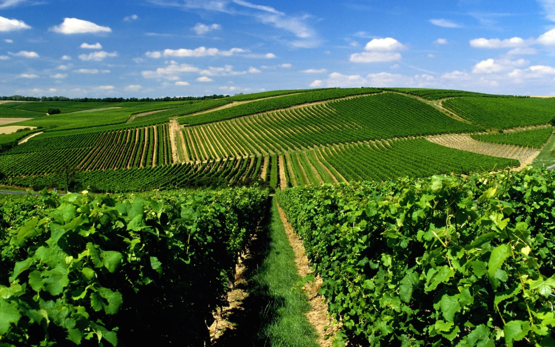 German wine exports on the rise